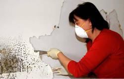 Как устранить плесень на стенах и потолке?