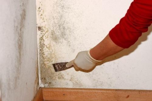 Как избавиться от плесневого грибка в доме