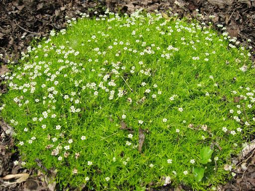 Мох для выращивания семян на даче